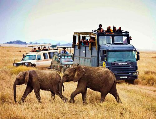 Tras la Senda de los Elefantes