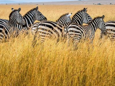 Viajar por Kenia y Zanzibar-post-kenia