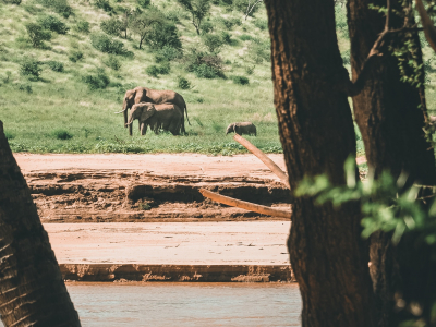 Viajar a Tanzania-post-elefante