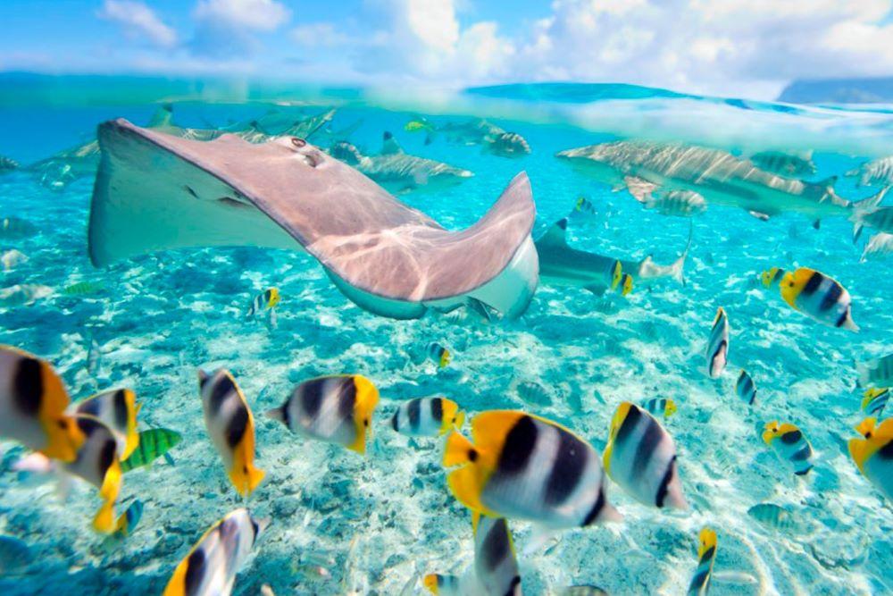 Viajar por Polinesia-papeete-rayas