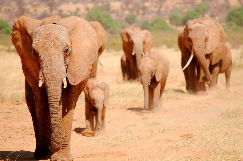 Viajar por Kenia y Zanzibar-reserva-nacional-de-samburu-elefantes