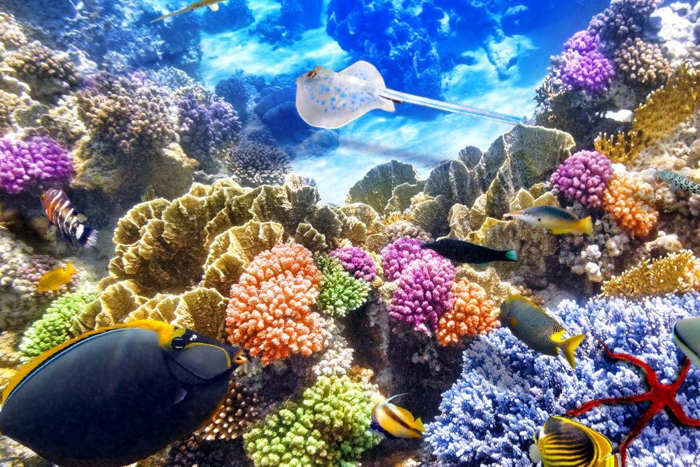 Viajar por Polinesia-bora-bora-animales-marinos