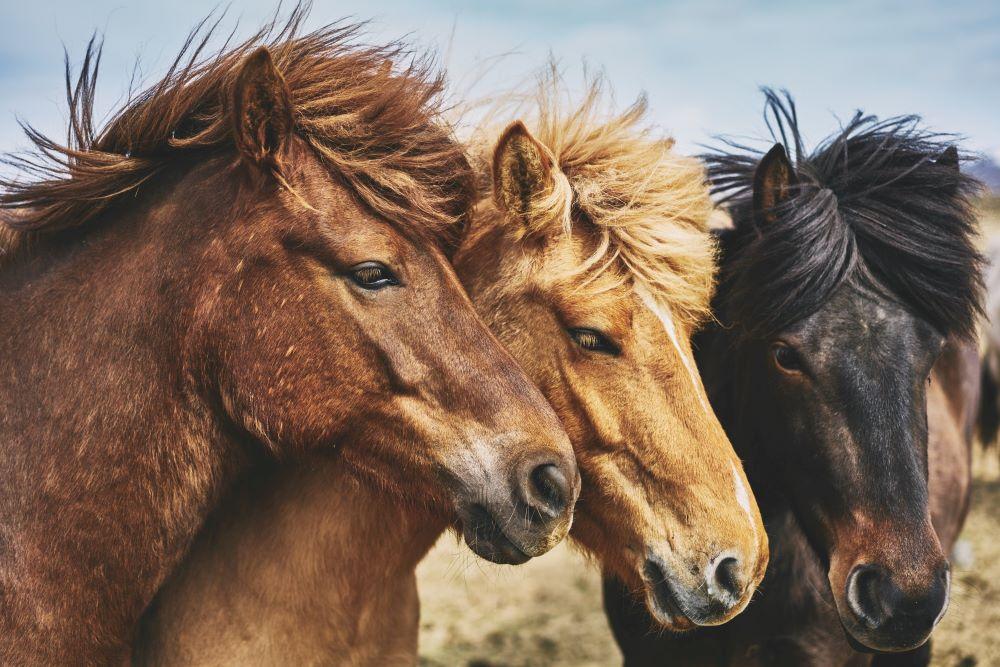 Viajar a Perú-cuzco-a-caballo