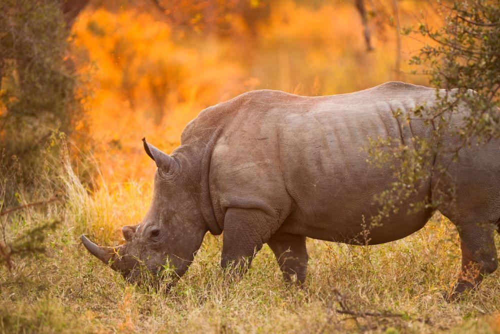 Viajar por Kenia y Zanzibar-reserva-privada-de-madikwe_rinoceronte
