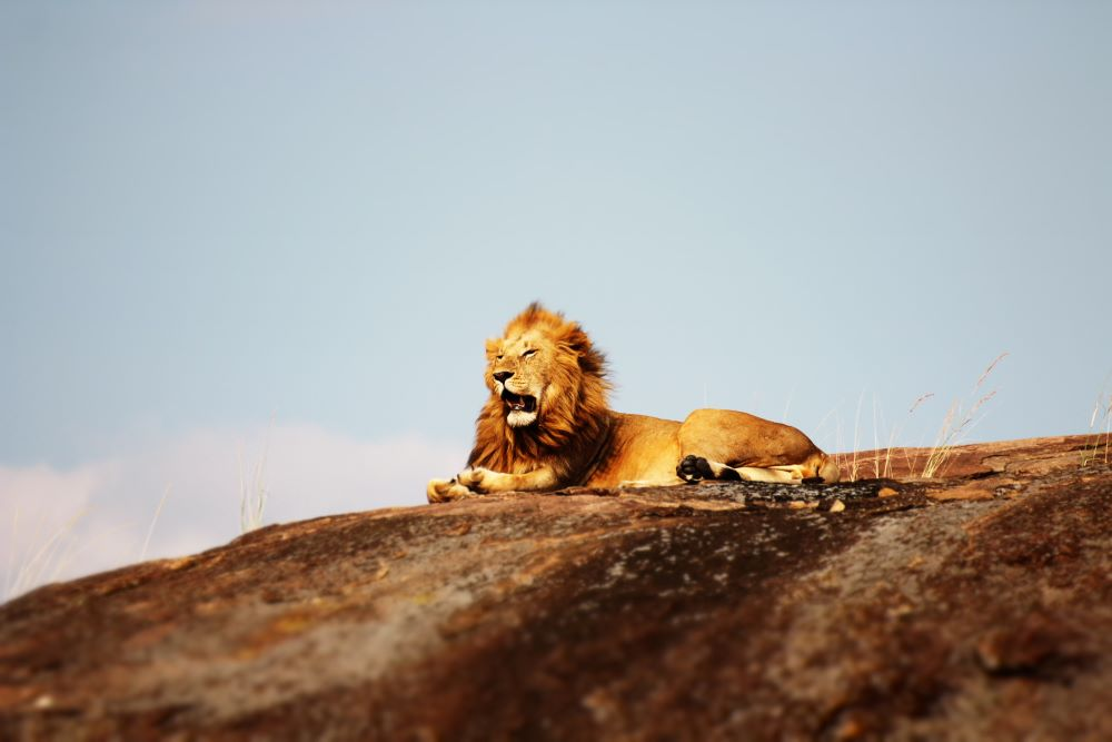 Viajar por Kenia y Zanzibar-reserva-nacional-de-samburu-leones