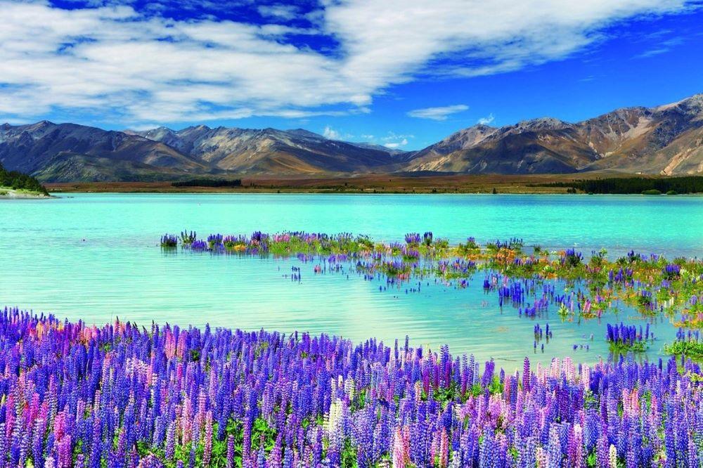 Viajar a Nueva Zelanda-lago-tekapo