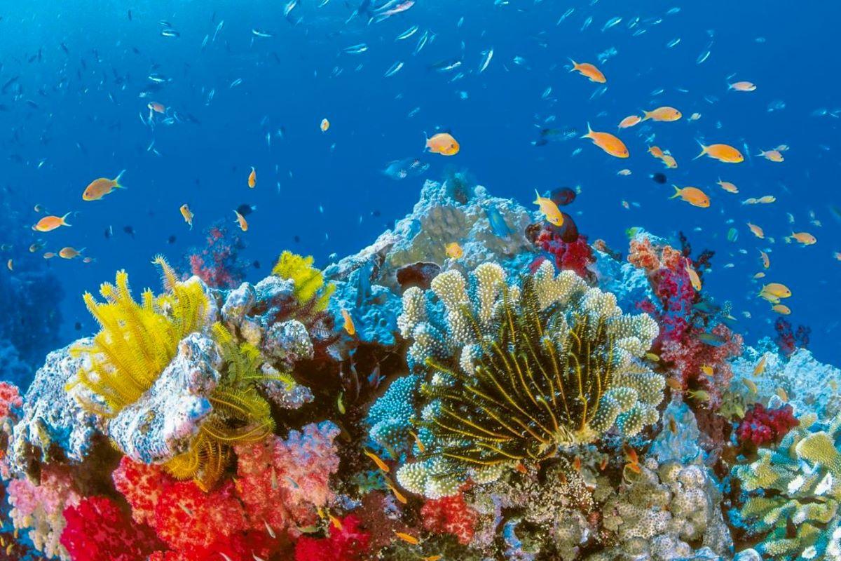 Viajar a Australia-cayo-coral
