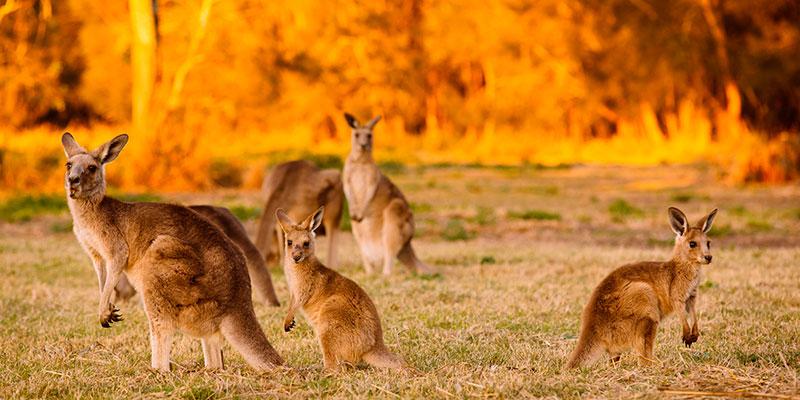 Viajes en Grupo a Australia