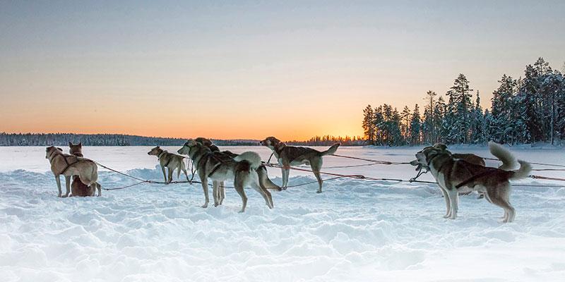 Viajes en Grupoo a Laponia