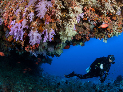 Viaje de buceo en Maldivas