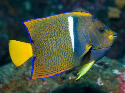 Viaje de buceo en Galapagos