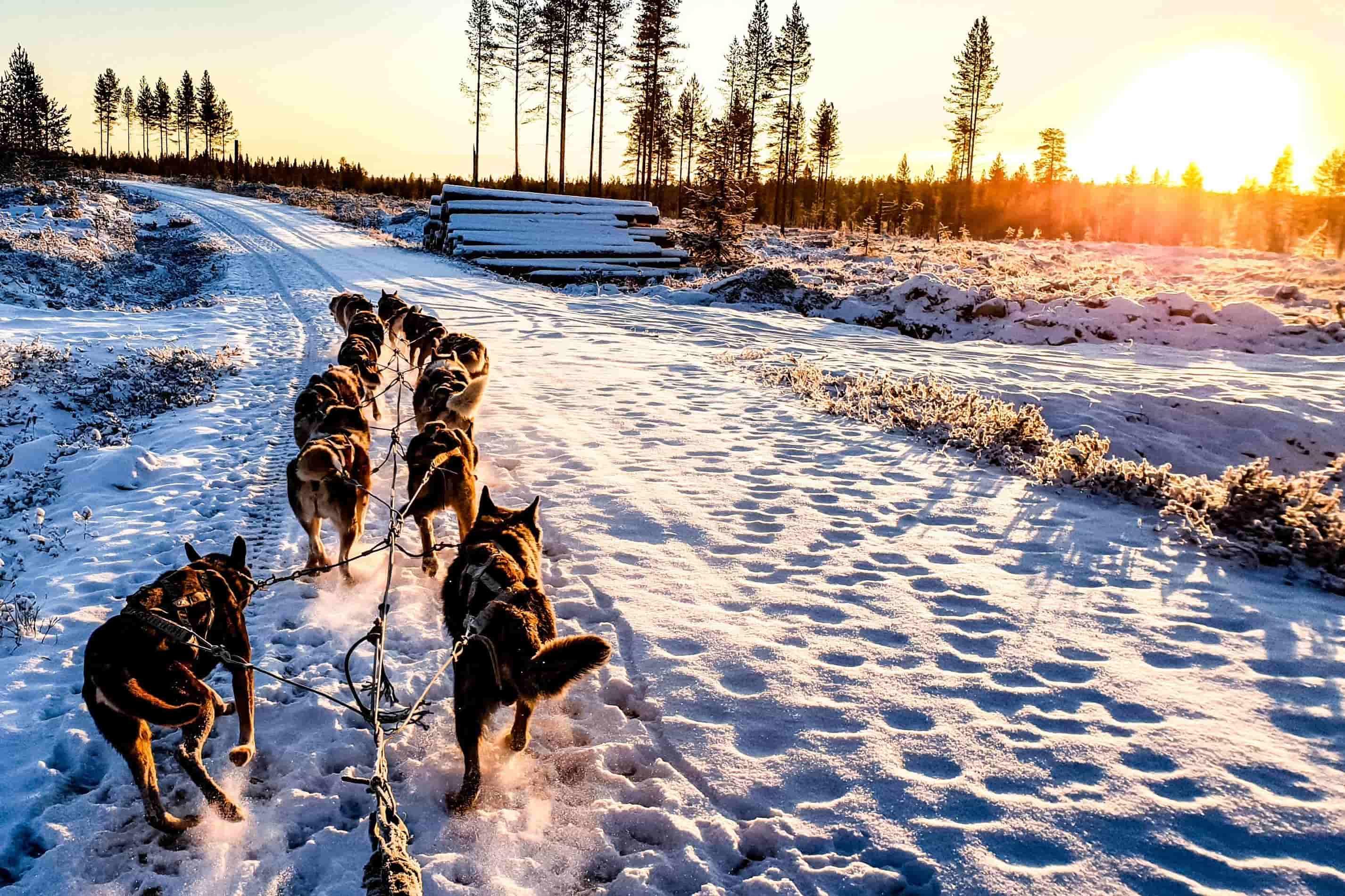 Ruka. En familia a Laponia.NUBA everywhere. Trineo perros