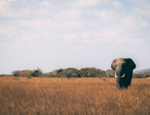 Kenia, la aventura familiar para fin de año