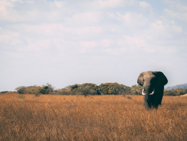 La aventura familiar para fin de año. Kenia. NUBA everywhere. Elefante