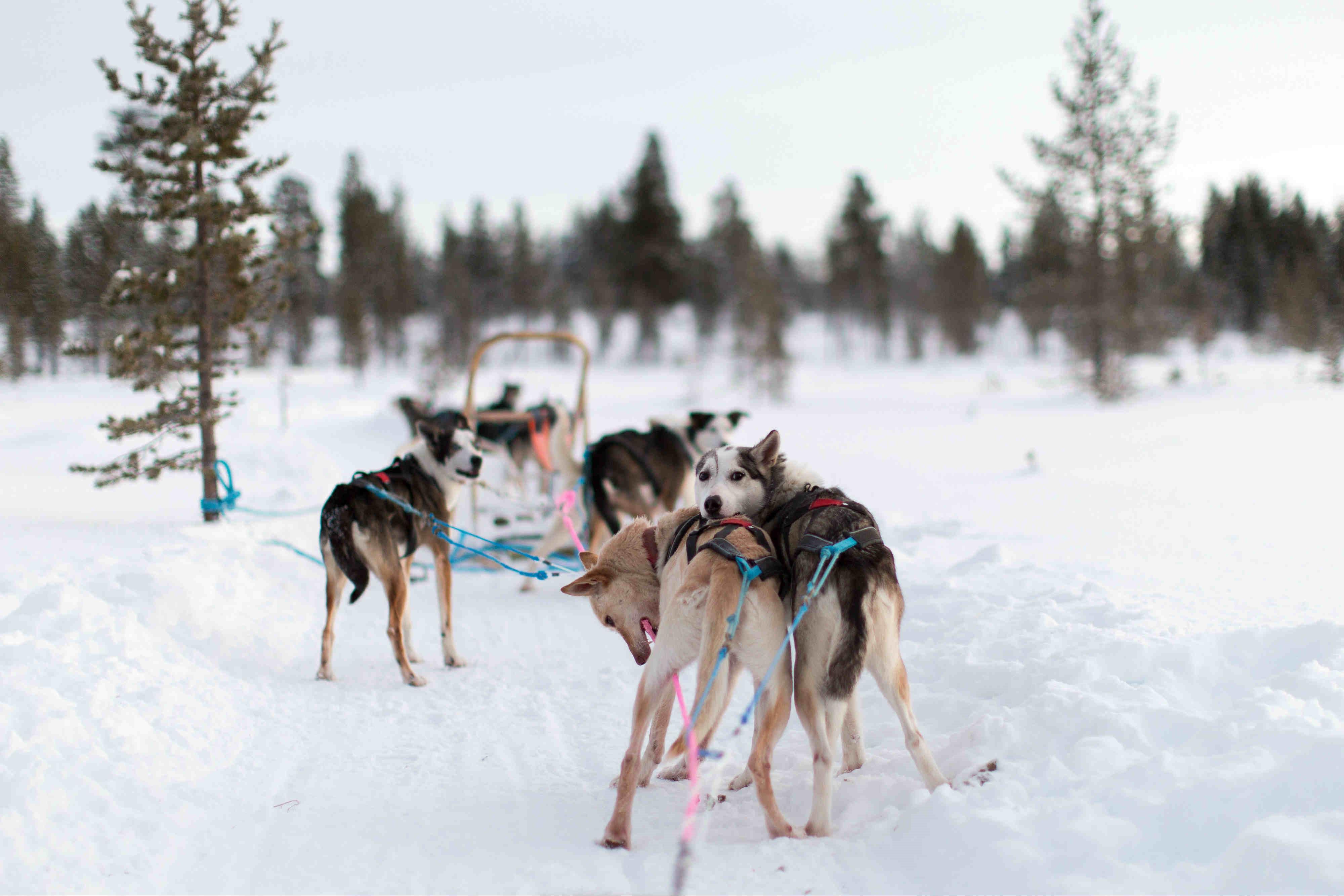 La gran experiencia polar. Ártico noruego. NUBA Everywhere. Trineo perros