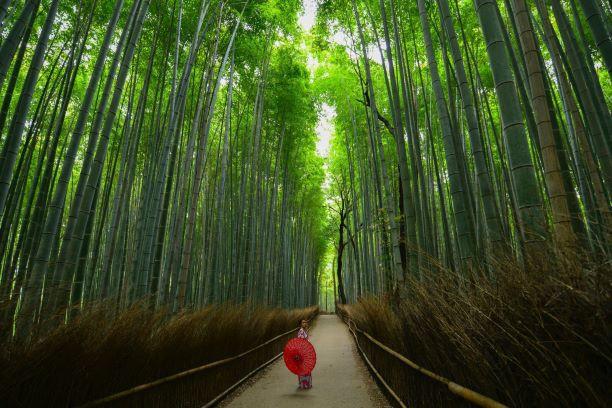 Geishas y samurais. Japón. NUBA everywhere. Arashiyama bosque bambú