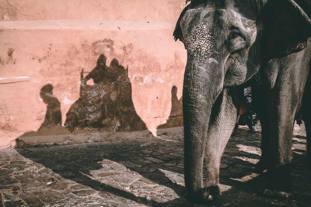 El corazón de un gran país. India del Sur. NUBA everywhere. Elefante indio