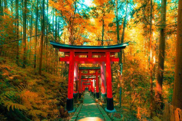 Geishas y samurais. Japón. NUBA everywhere. Santuario Fuhimi inari