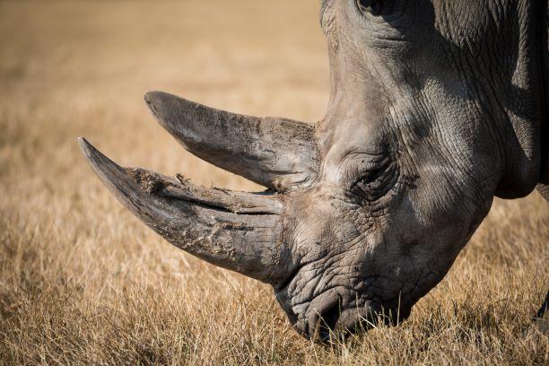 El corazón de África. Tanzania. NUBA everywhere. Rinoceronte