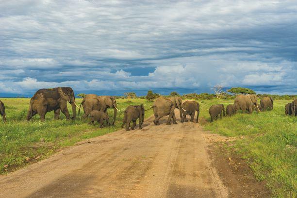 El corazón de África. Tanzania. NUBA everywhere. Paso elefantes