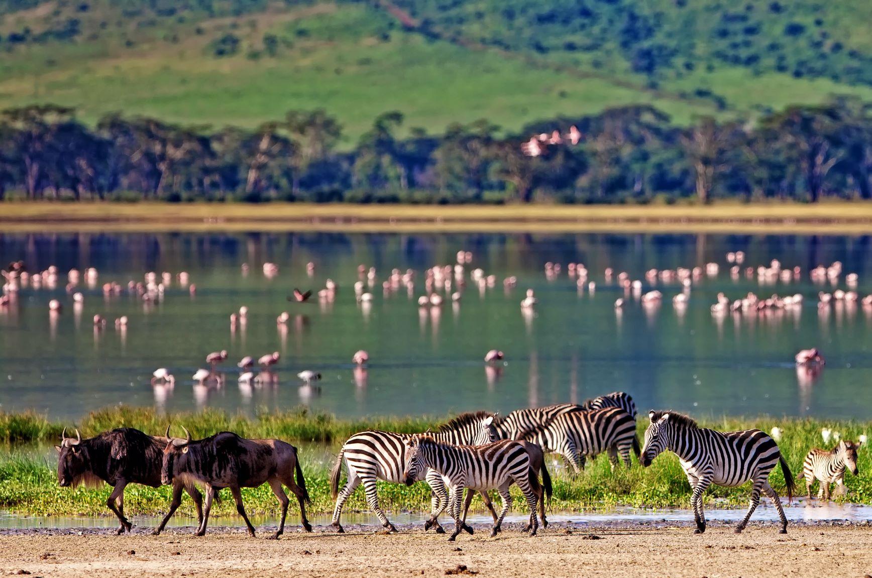 El corazón de África. Tanzania. NUBA everywhere. Cebras y ñus
