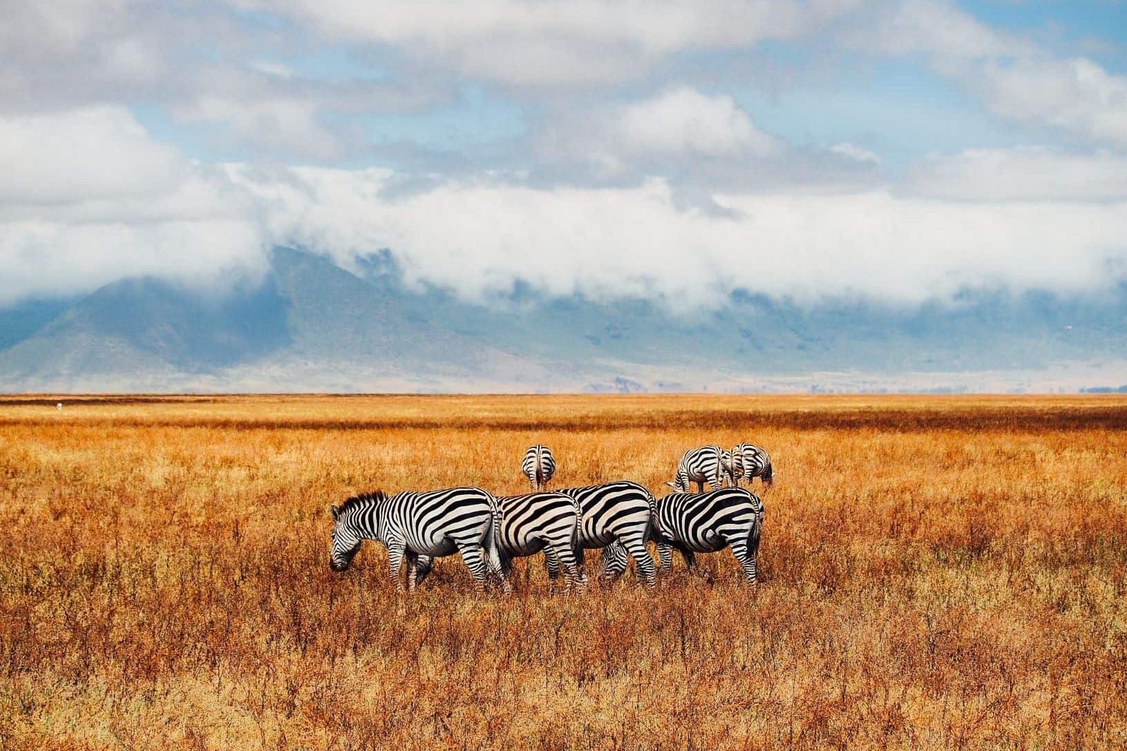 El corazón de África. Tanzania. NUBA everywhere. Cebras en Ngorongoro
