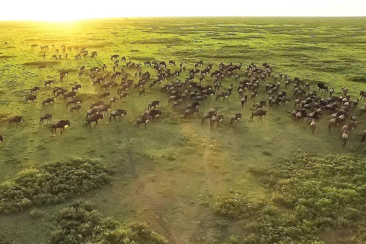 El corazón de África. Tanzania. NUBA everywhere. Gran migración