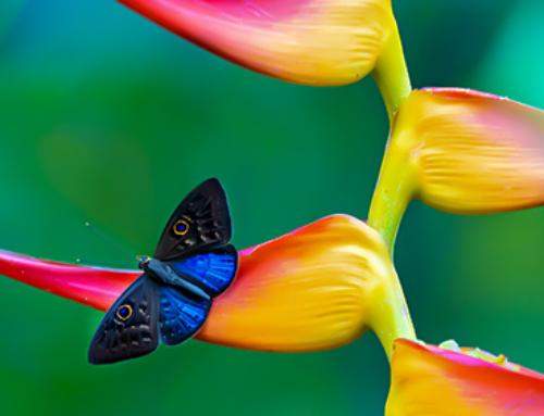 Costa Rica. En busca de las mariposas