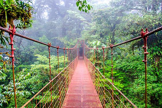 Costa Rica. En busca de las mariposas. NUBA everywhere. Puente en Monteverde
