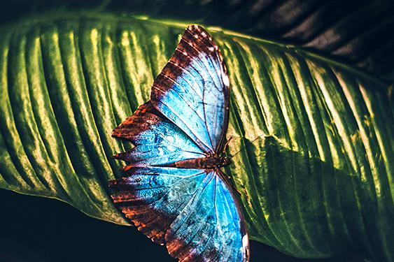 Costa Rica. En busca de las mariposas. NUBA everywhere. Mariposa