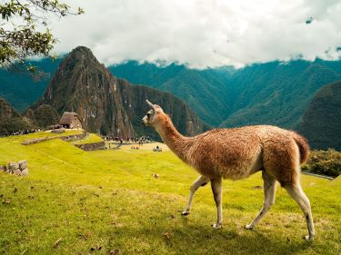 Viaje Perú-machupichu-y-llama-POST