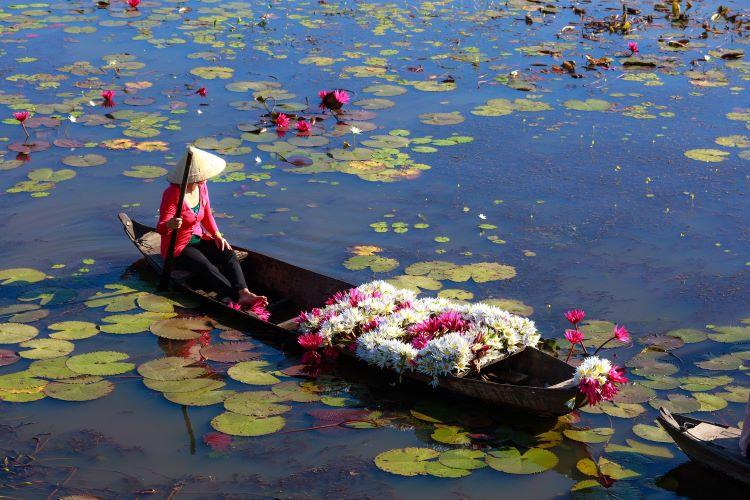 Viaje Vietnam-flores rio