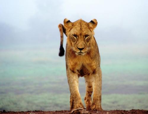 KENIA y ZANZÍBAR. En un lugar de África