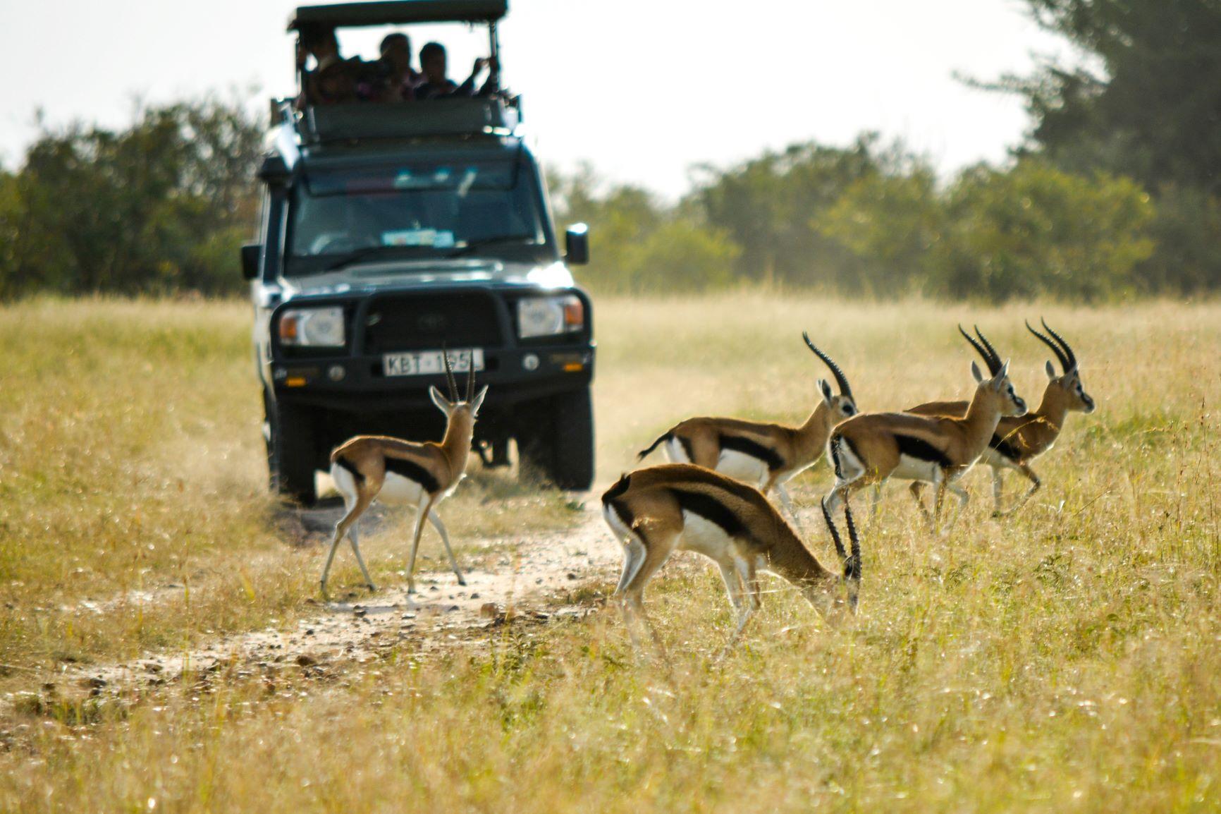 Viaje Kenia y Zanzibar-safari_impalas