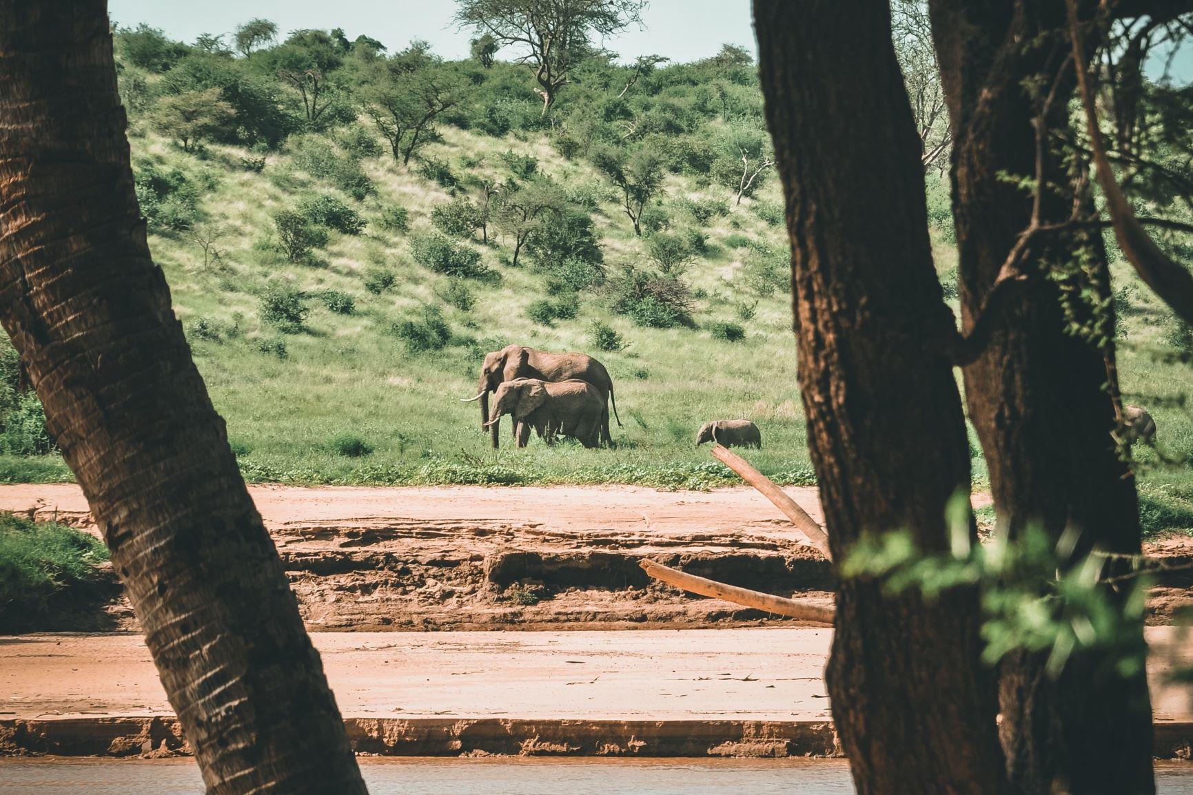 Viaje Kenia y Zanzibar-elefante_africano