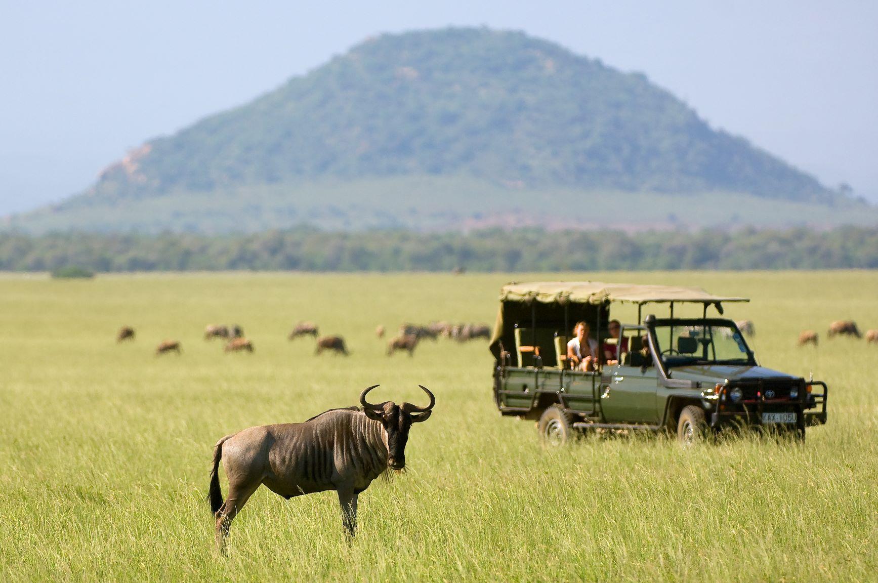 Viaje Kenia y Zanzibar-safari-nu