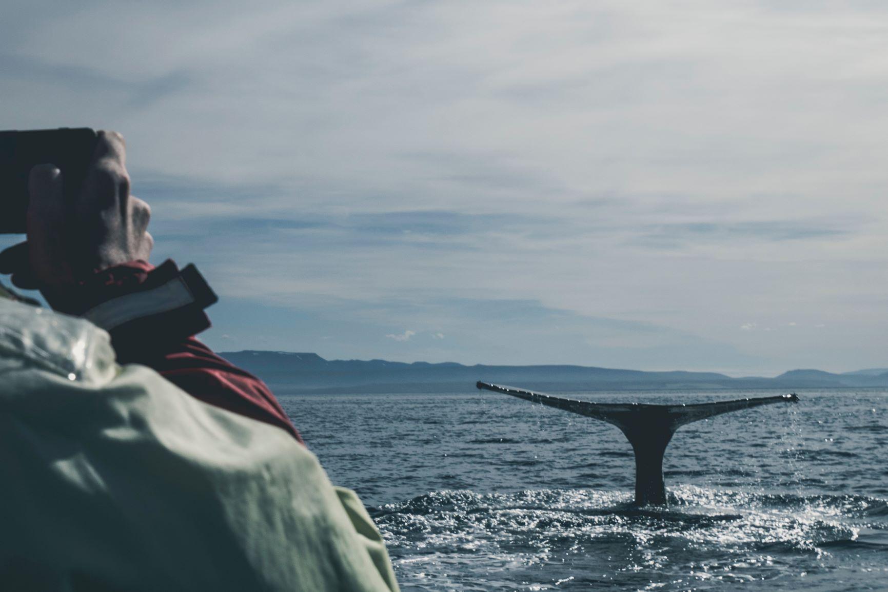 Viaje Islandia-ballenas