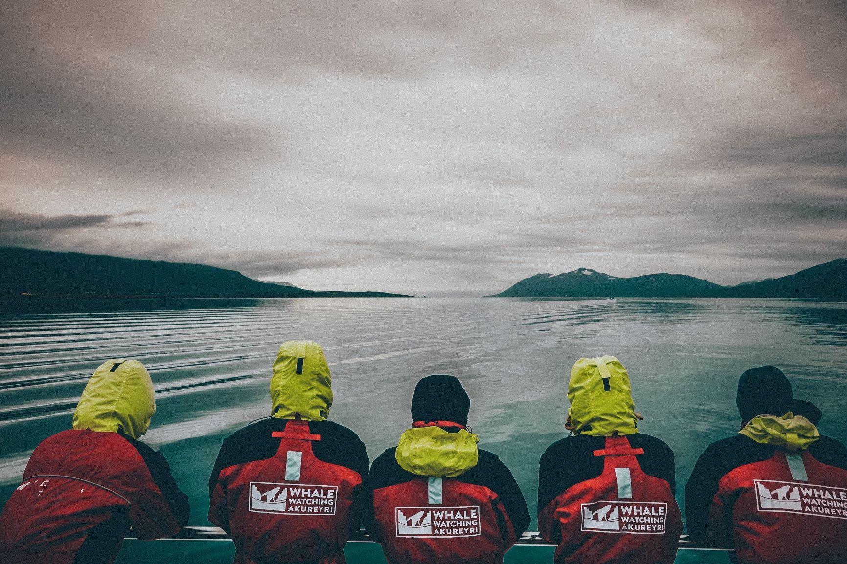 Viaje Islandia-ballenas_avistamiento