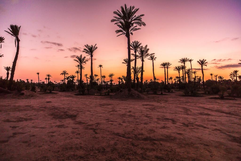 Viaje Marruecos Reyes Magos-palmeral