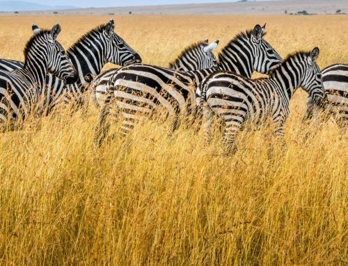 KENIA Y TANZANIA. Los secretos de África