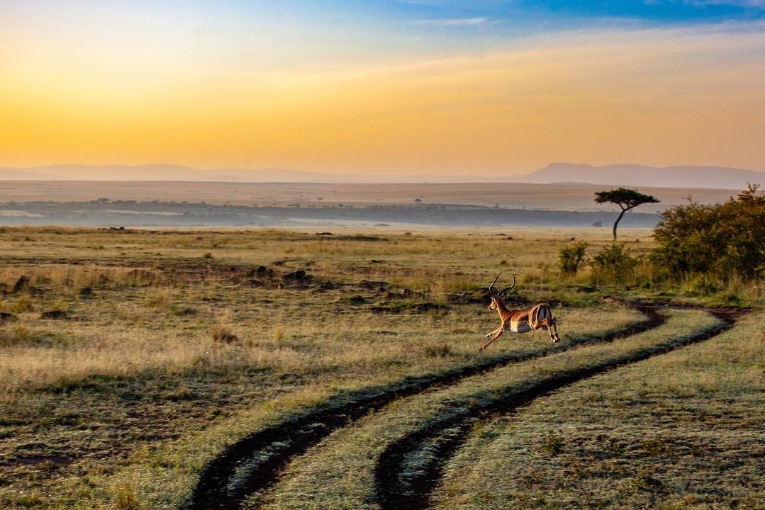 Viaje Kenia y Tanzania-antilope