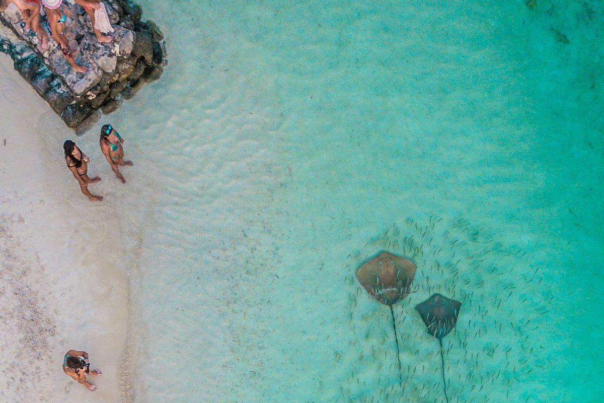 manta raya en maldivas
