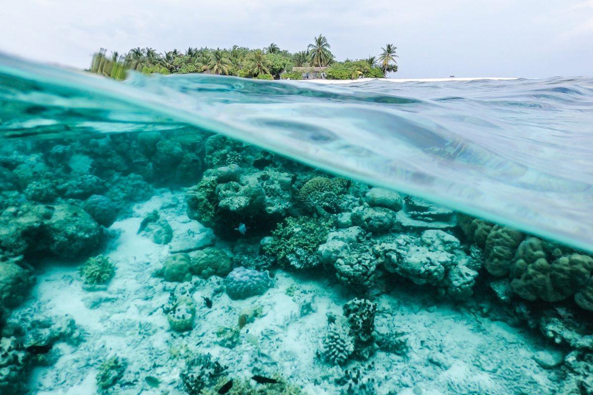 Viajar a Seychelles-underwater-maldivas