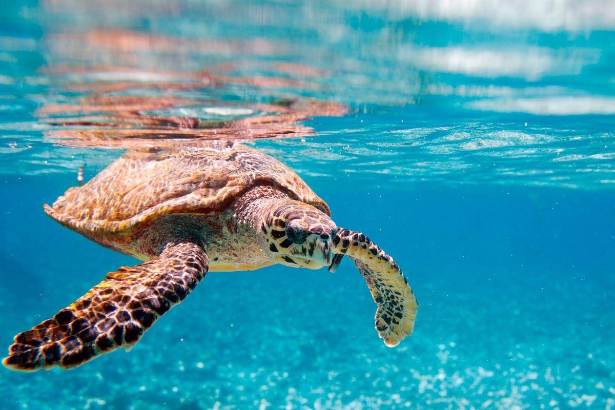 Viajar a Seychelles-tortuga-fauna