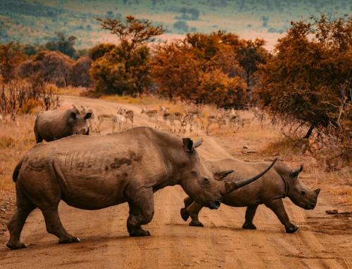NAMIBIA. Horizontes salvajes