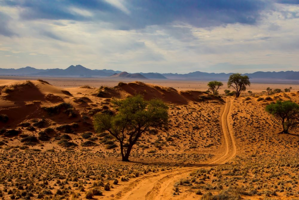 Viajar a Namibia-camino