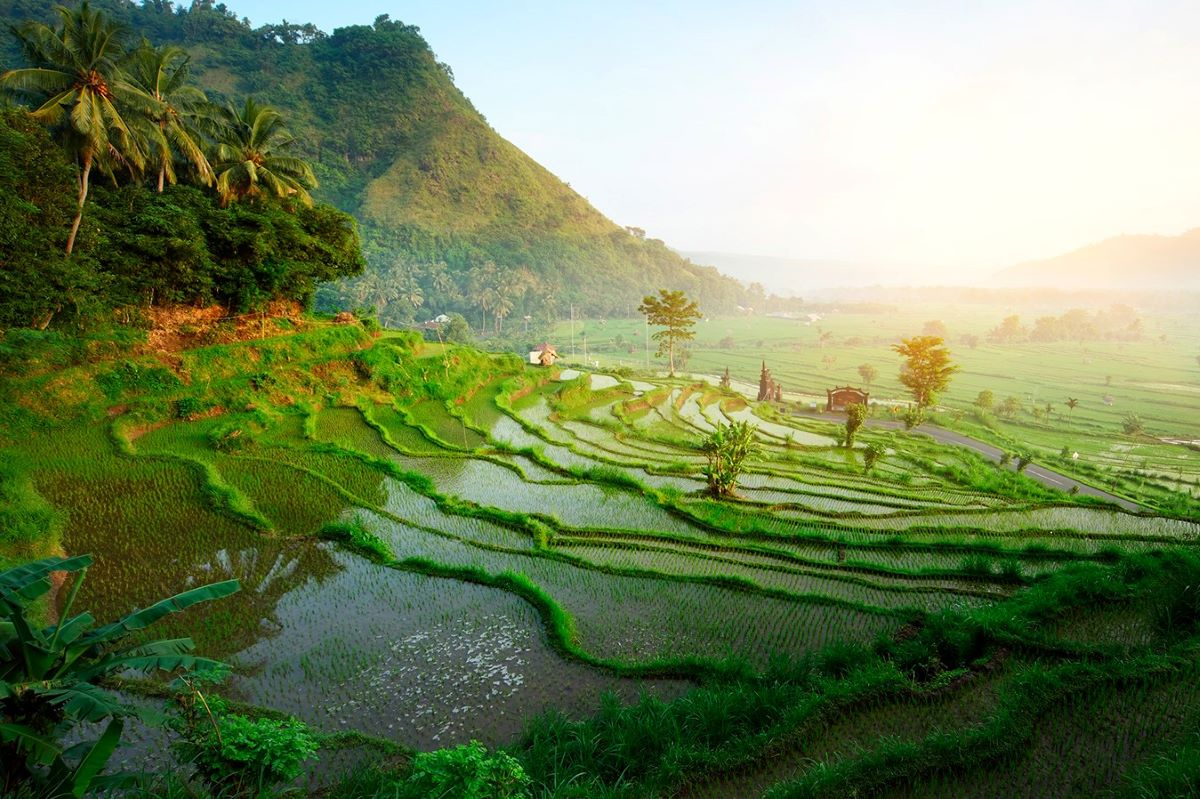 Viajar a Bali-ubud_arrozales-2