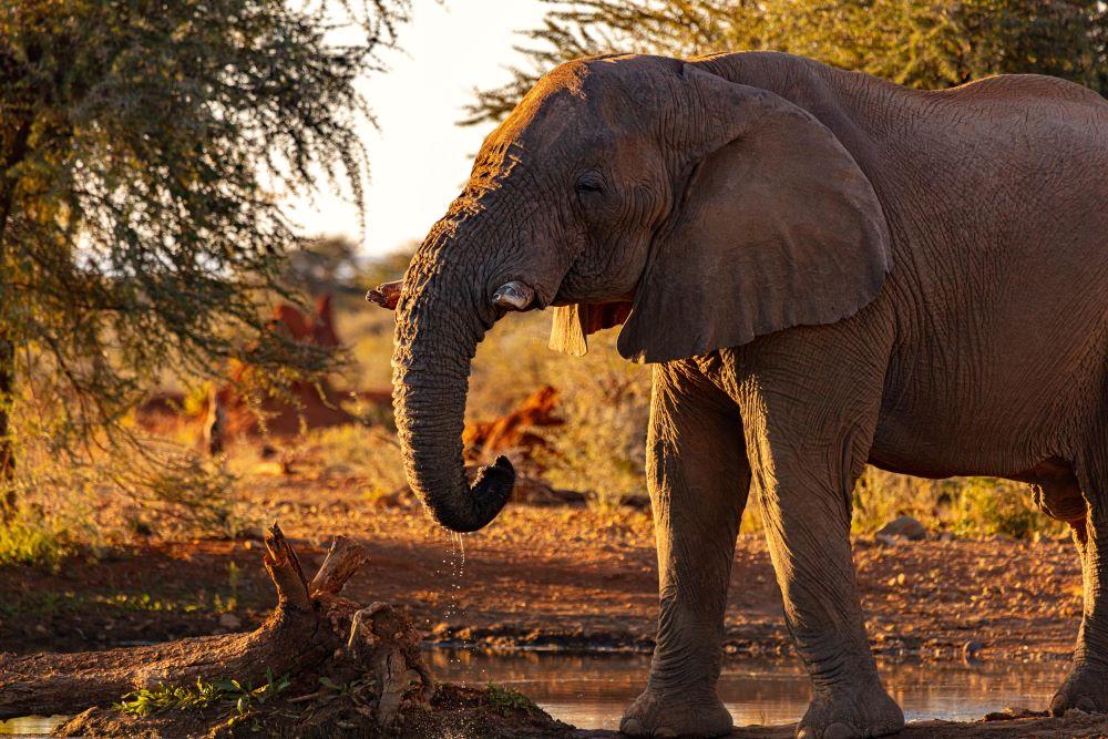 Viajar a Namibia-etosha-elefante