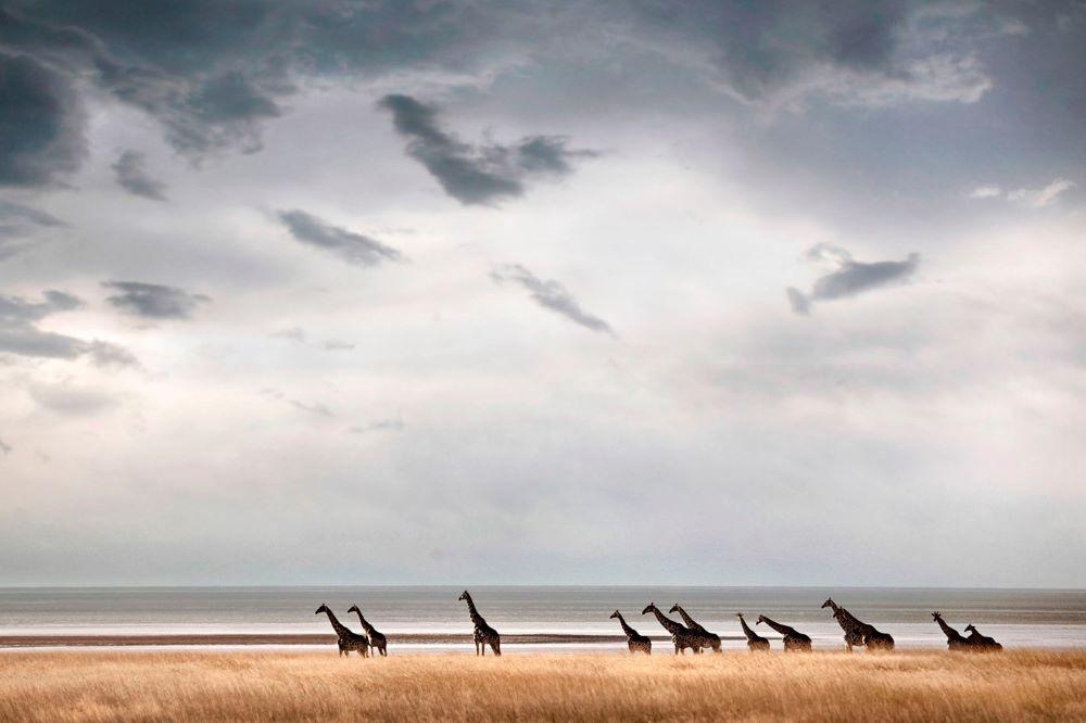 Viajar a Namibia-parque_nacional_de_etosha_jirafa
