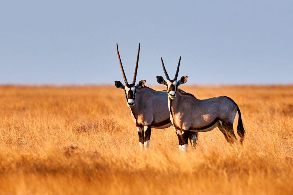 Viajar a Namibia-parque_nacional_de_etosha